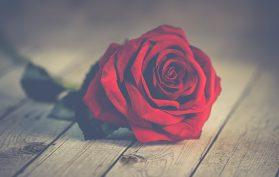 52 Ancestors in 52 Weeks Week 7 Valentine Rose